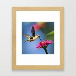 Hummingbird Flight Framed Art Print