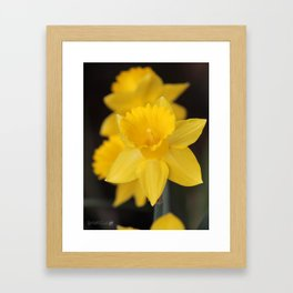 Trumpet Daffodil named Exception Framed Art Print