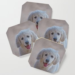 Young Golden Retriever breed dog with light fur stares into your eyes Coaster