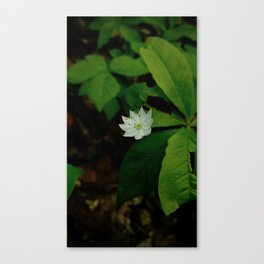 Wild Strawberry Blossom Canvas Print