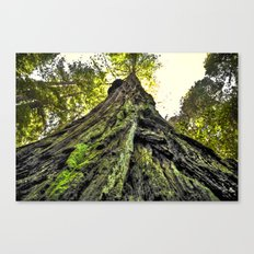 The Moss & The Tree Canvas Print