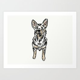 Brody the Blue Heeler Art Print