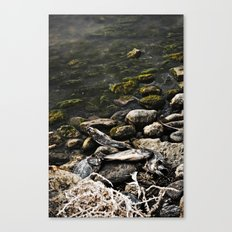 Dead Fish Canvas Print