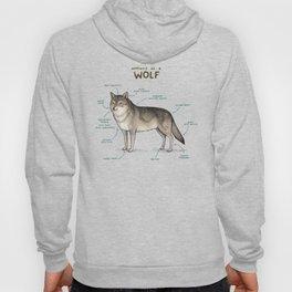 Anatomy of a Wolf Hoody