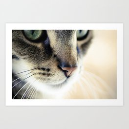 The Cat's Whiskers Art Print