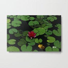 Lilypads Metal Print