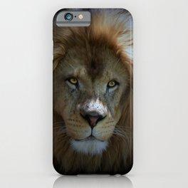 Portrait of a Lion iPhone Case