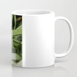 Kiss Me Said The Spider To The Fly Coffee Mug
