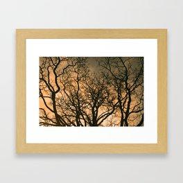 fractal tree Framed Art Print