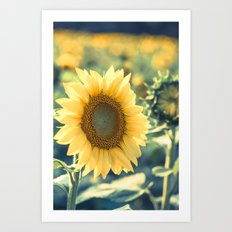 In The Sunlight Art Print