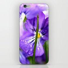 purple pansys  iPhone & iPod Skin