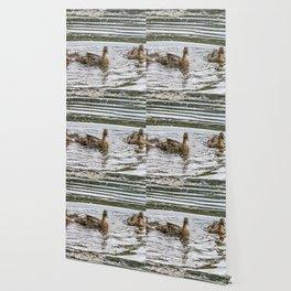 Meet the Quackers Wallpaper