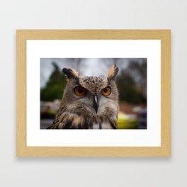 European Eagle Owl Framed Art Print