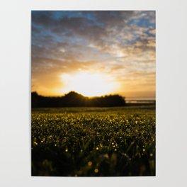 Te Atatu Peninsula Sunrise Poster