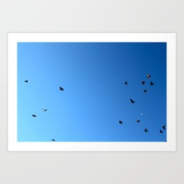 Bird Plane FOUR Art Print