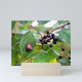 Poison or not : Snail with berries Mini Art Print