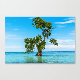 Tree Siquijor, Philippines Canvas Print