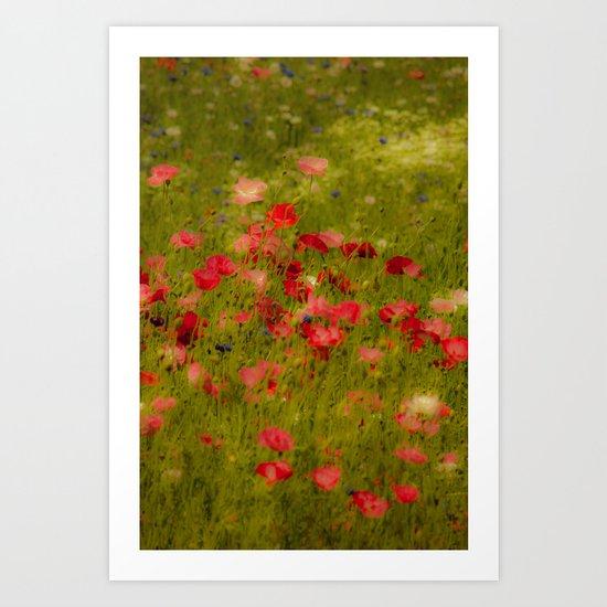 Deep Poppies Art Print