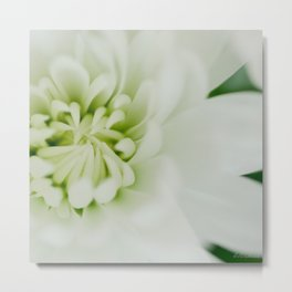 White chrysanthemum floral - botanical photography #Society6 Metal Print