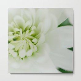 White chrysanthemum floral - botanical photography #Society6 Metal Print