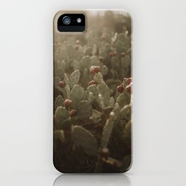Cacti on Beach in Israel iPhone Case