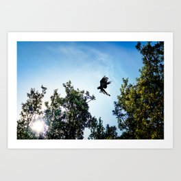 Yellow-Tailed Black Cockatoo Jumping Between Trees Art Print