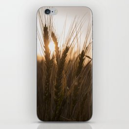 Wheat Holding the Sunset iPhone Skin