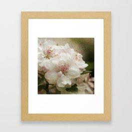 Blossom squared Framed Art Print