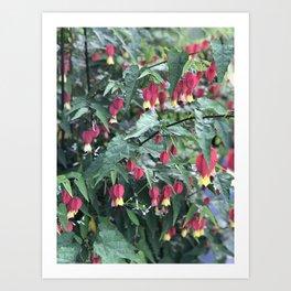 Red firecracker flower in Butchart's Garden Art Print