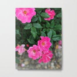 Pink Flowers II Metal Print