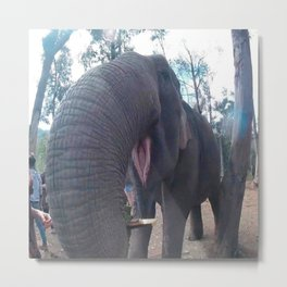 elephant in my face Metal Print