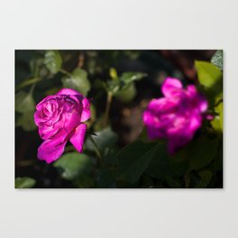 Eternal Sunshine On The Thornless Rose Canvas Print