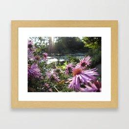 Rays on Monet's Garden Framed Art Print