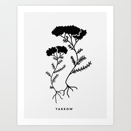Yarrow Botanical Art Print