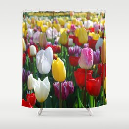 Colorful Springtime Tulips in the Netherlands Shower Curtain