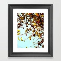cherries in autumn Framed Art Print