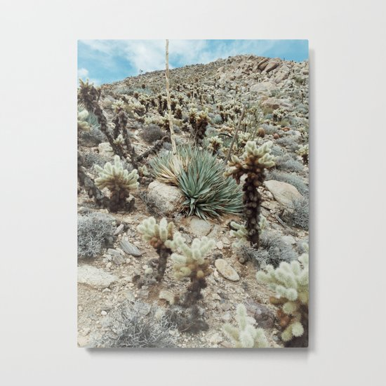 Mountain Cholla Metal Print