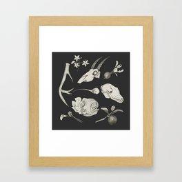 Bones and Botanical Sketches Framed Art Print