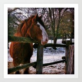 the barnyard - draft horse Art Print