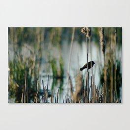 Bird In The Cattails Canvas Print