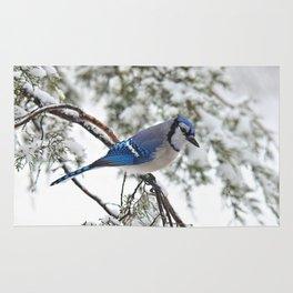 Beautiful Blue Jay Rug