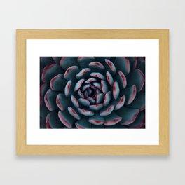 Frosted Succulent Framed Art Print
