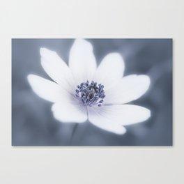 Just A Little Wildflower Canvas Print