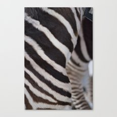 Zebra 02 Canvas Print