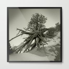Tree at Tent Rocks Metal Print