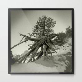 Tree at Tent Rocks Metal Print