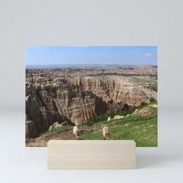 Bighorn Sheep At Sage Creek Mini Art Print