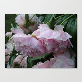 Flower pic 6 Canvas Print