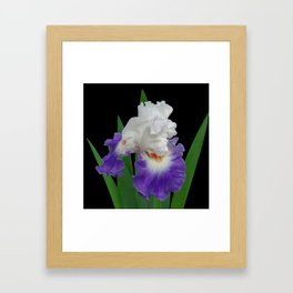 Iris 'Last Laugh' on black Framed Art Print