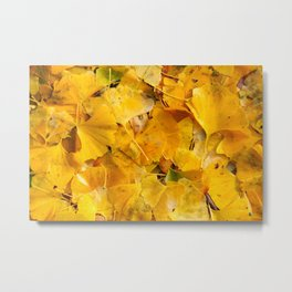Ginkgo biloba leaves Metal Print